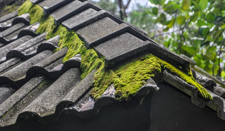 Get Rid of Algae