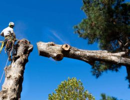 tree-services-looping