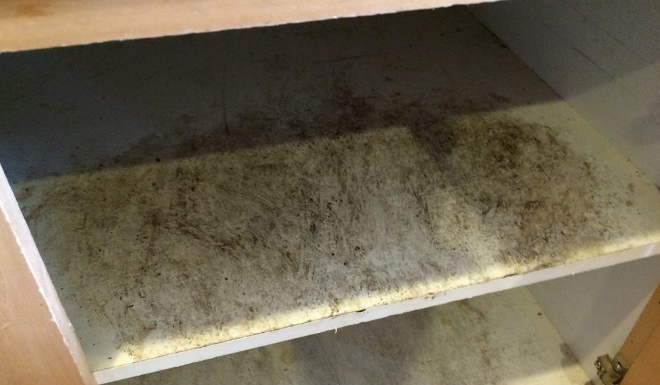 black mold vs mildew