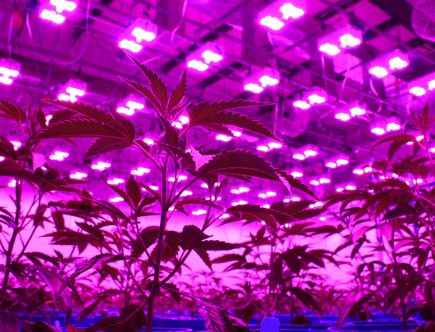 best led grow lights 2019 high times