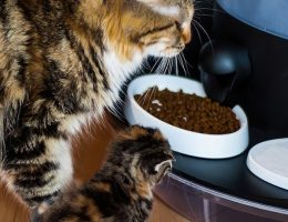 automatic cat feeder wet food refrigerated