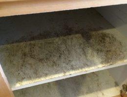 black mold vs mildew