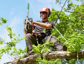 arborist salary massachusetts