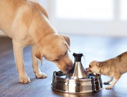 Dog-fountain