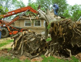 certified arborist tree care near me